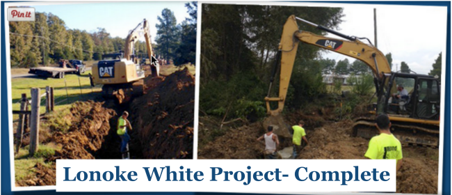 Lonoke White Project 2
